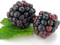 Food for Health and Longevity # 4: Black raspberries