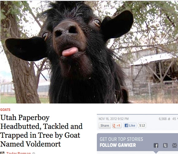 Utah Paperboy headbutted, tackled and trapped in tree by goat named Voldemort
