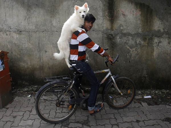 Laughing Fit: Best Funny Pictures from Around the World