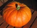 Dry Skin: 21 Herbs and Herbal Oils Good Dry Skin :Pumpkin Seed Oil