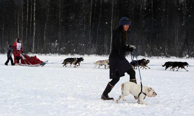 Iditarod Sled Dog Race in Alaska