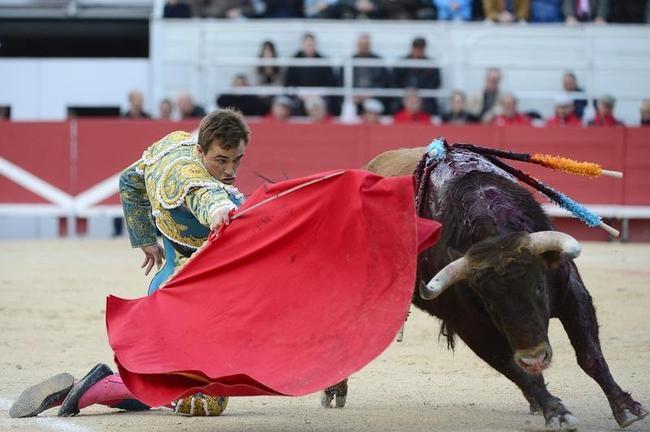 Bullfighting in France