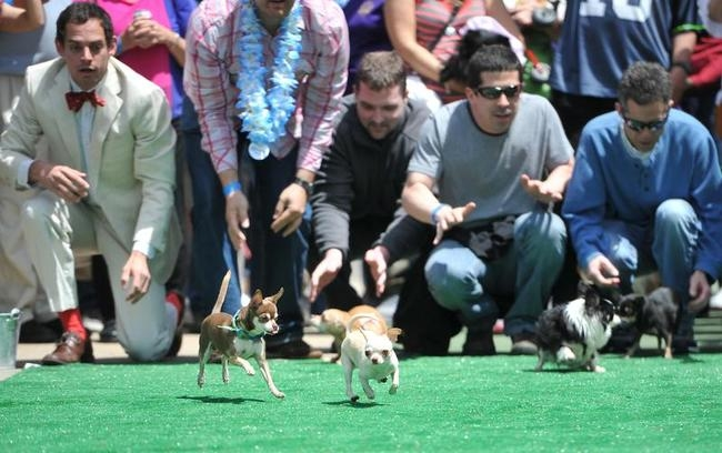 Annual Chihuahua Race