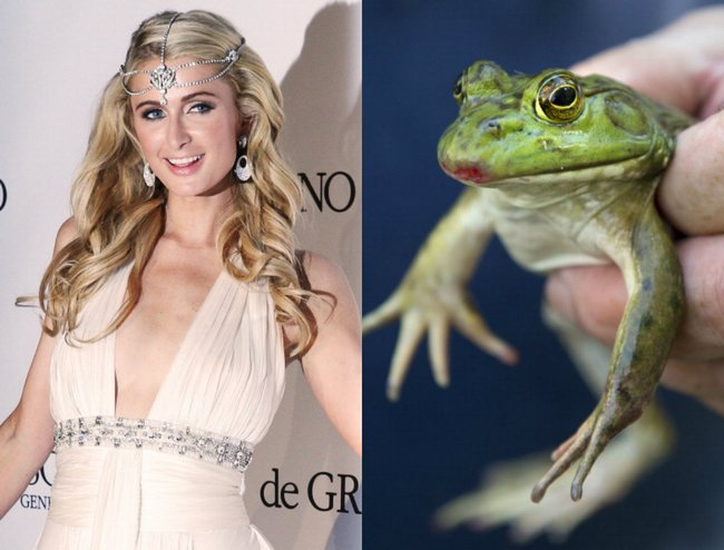 From Johnny Depp's Barbie collection to Paris Hilton's frog hunt, celebrities have bizarre hobbies that one can never imagine.