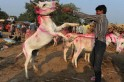 Hee-Haw! Donkey Fair in Gujarat