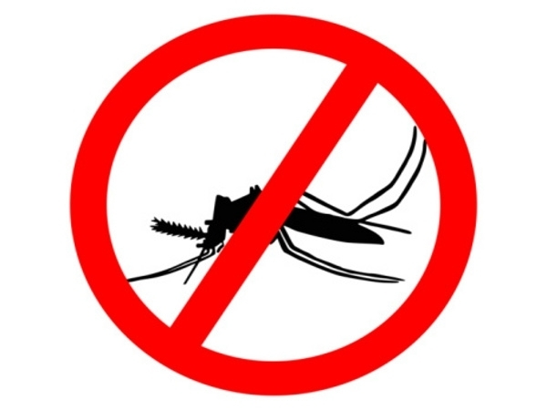 Dengue-Diät