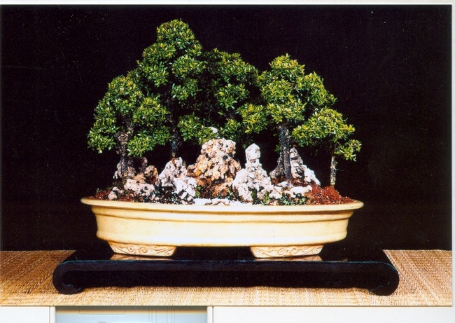 Bonsai Study Group of the Indo-Japanese Association and Borivali Sanskrutik Kendra has organised an exhibition of Bonsai trees at Vanvihar garden in Borivali, Mumbai.