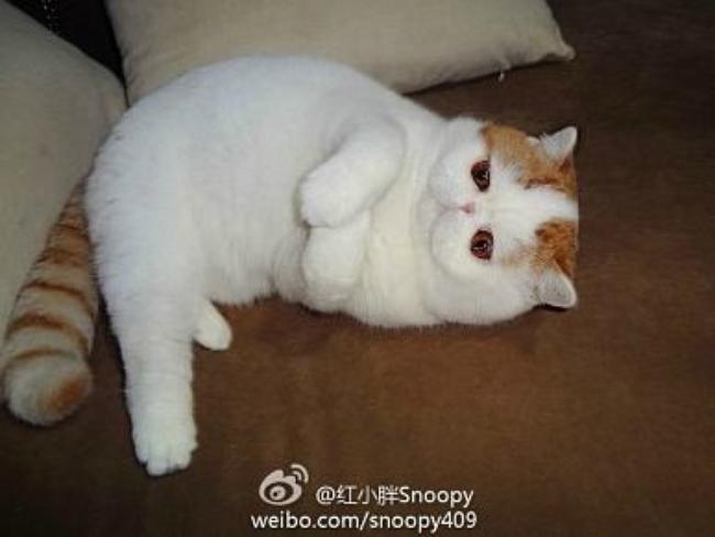 Adorable Snoopybabe