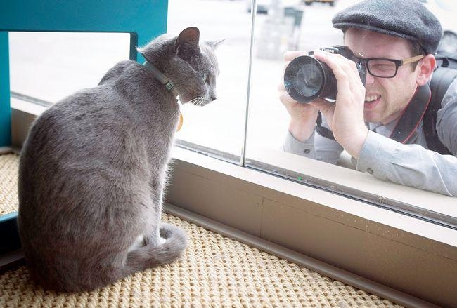 A man takes a photo of a cat as it sits at the window of the cat cafe in New York