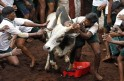 Villagers try to control a bull during a bull-taming festival on the outskirts of Madurai town