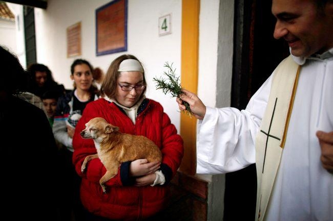 Church Which Blesses Pets