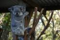The Land of Koalas & Kangaroos