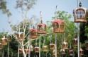 Bird Singing Contest in Thailand