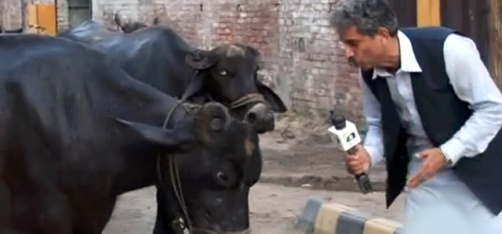 http://www.indiatimes.com/videocafe/today-in-wtf-pakistani-tv-reporter-interviews-buffaloes-for-his-news-report-259132.html