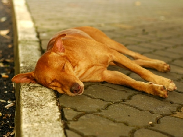 How To Care For Pets And Strays This Diwali