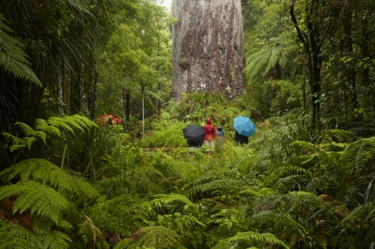 Waipou