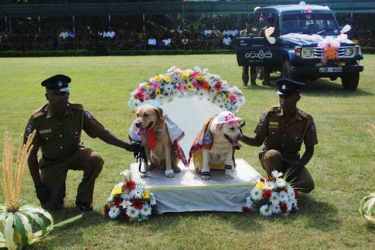 Dog Wedding in Sri Lanka