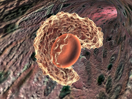 Bone Marrow Cells Helping Regenerate Bladder