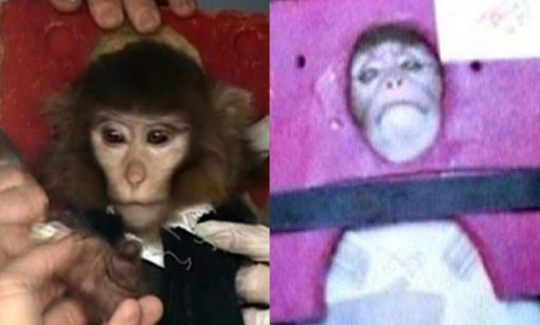 Was Iran's Space Monkey Mission Fake?