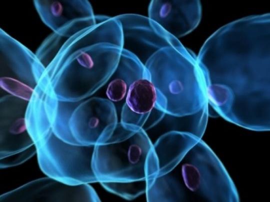 Protein that can Kill E Coli