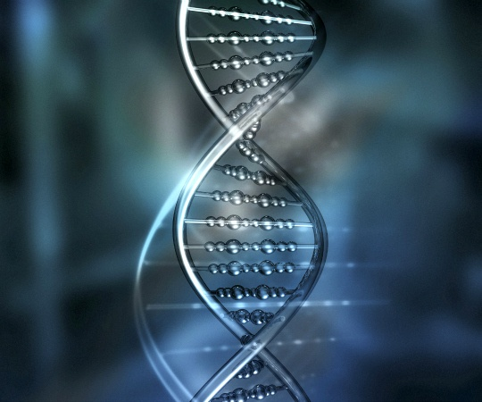 Researchers Isolate Gene That Reverses Aging