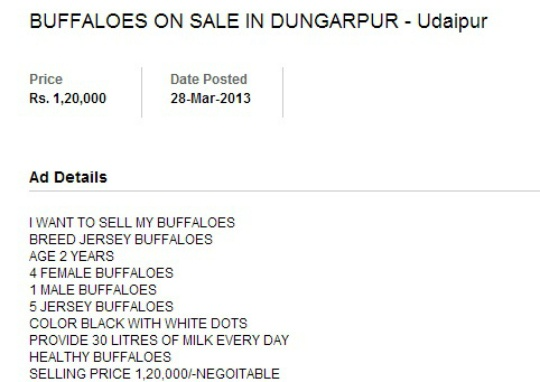 Rural India Selling Cows, Buffaloes on the Web