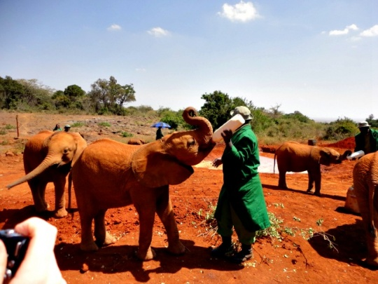 Animal Orphanage & Giraffe Centre, Nairobi