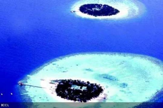 Adopt a Coral in Maldives