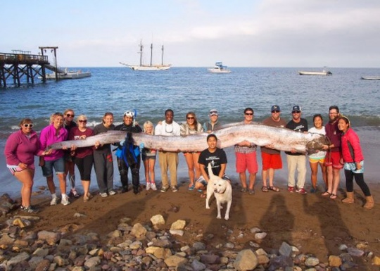 18-foot-long oarfish