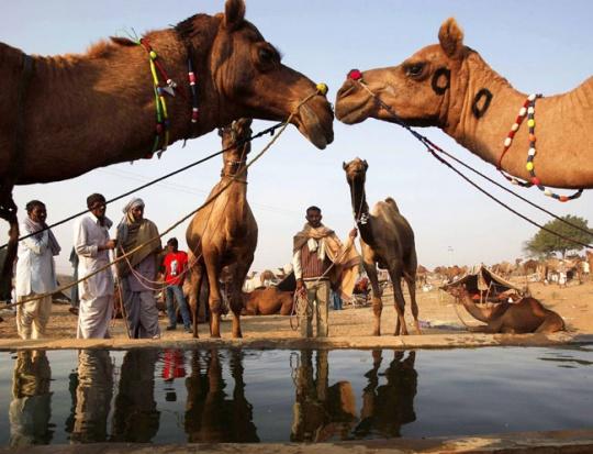 Pushkar Mela charms foreign tourists