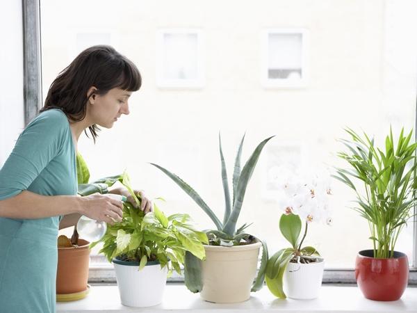 Go Green: Health Benefits Of Houseplants