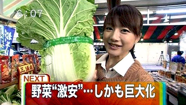 Giant cabbages of Fukushima