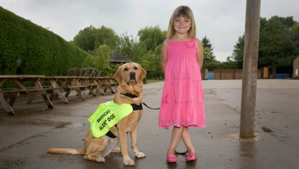 Medical Alert Dogs
