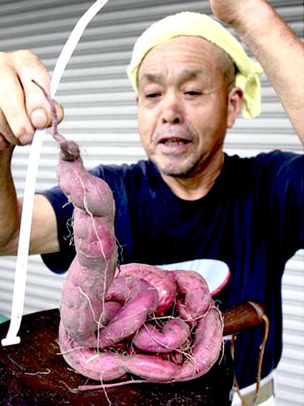 Snaky radishes of fukushima