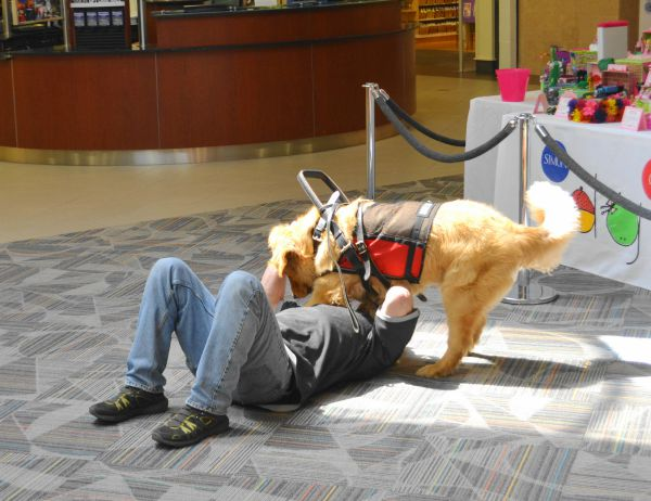 11 Types Of Service Dogs Who Make The Lives Of Their