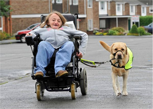 Wheelchair Assisting Dogs
