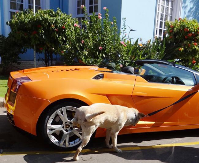 Cars   Tamil