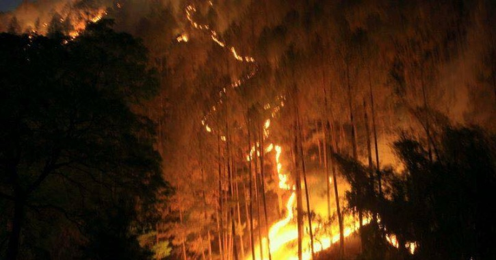 Here's Everything You Need To Know About Forest Fires ...