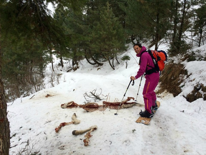 Australian Tourist Comes Across Endangered Snow Leopard While Skiing In Kashmir