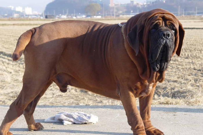 This Chinese Dog Is Worth Rs 1 Crore And It Ll Be