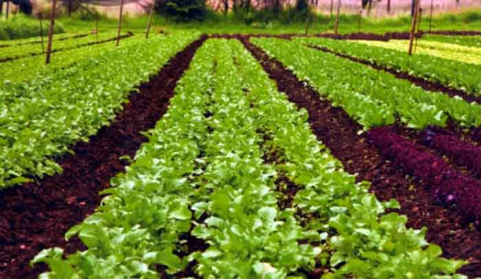 comparative study of organic farming policy Performance of organic and conventional agriculture is summarised, and the results of four  results from a 21-year study of farming sectors in  the comparative .