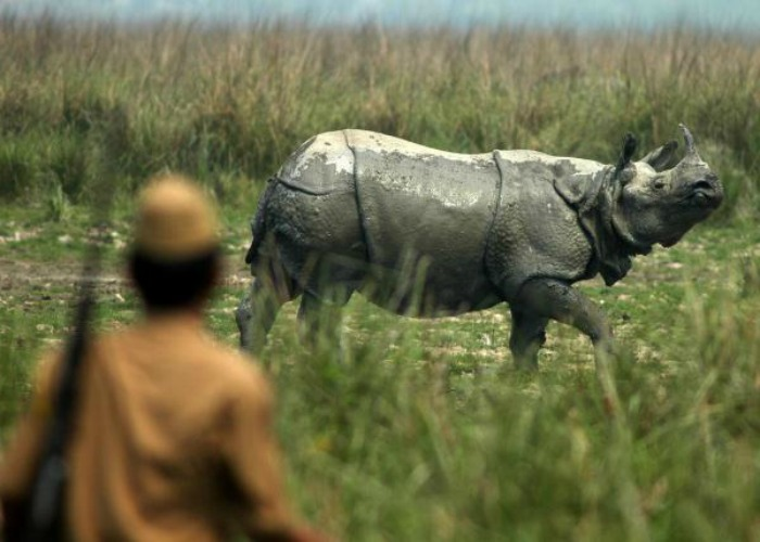 rhino poaching in assam essay Another way to preserve the rhino is to find substitutes for the  poaching in africa and the black market that stems from it  assam region of india,.