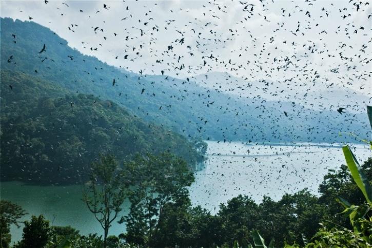 Doyang Lake