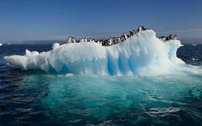 14 reasons that 39 ll at least make you plan a visit to for Can you visit antarctica