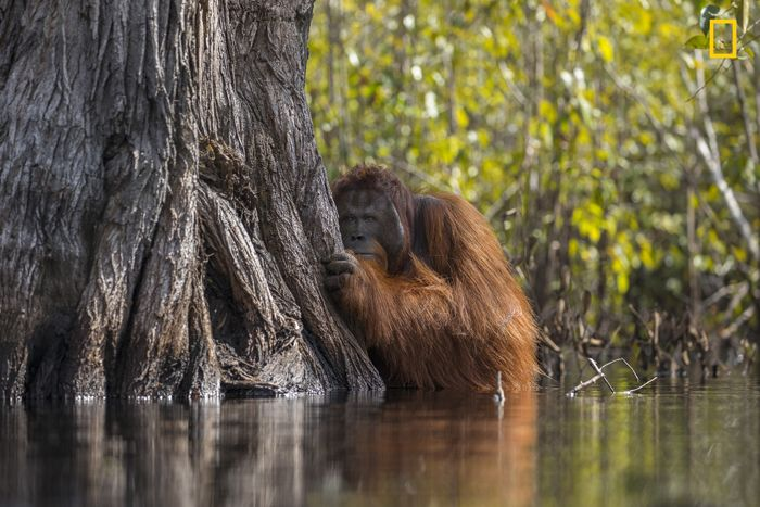 Face To Face In A River In Borneo by Jayaprakash Joghee Bojan