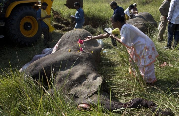 The Deadly Human Wildlife Conflict in India-People And Wildlife