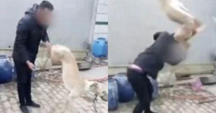 man kills dog