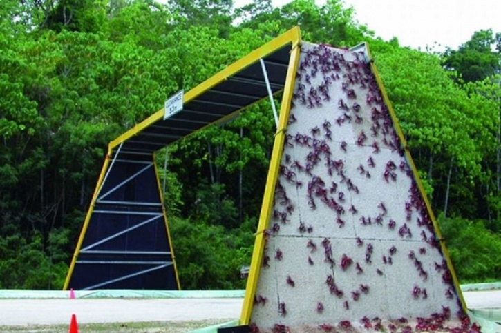 Christmas Island National Park Report
