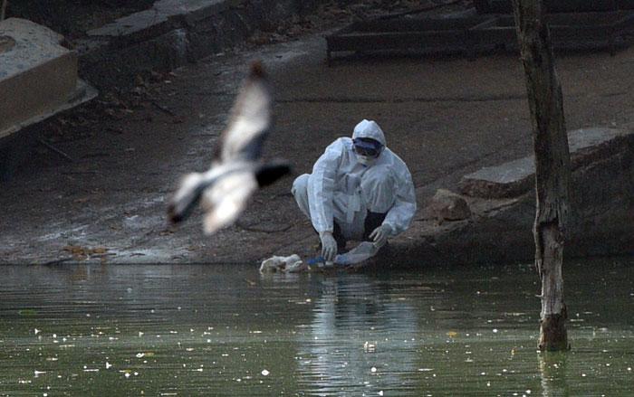 India Declares Itself Free From Bird Flu