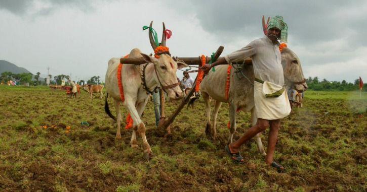 Indian farmer agriculture farm